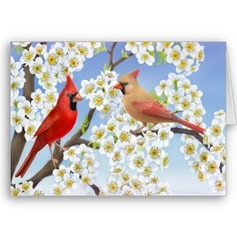 Cardinal Couple in Apple Blossoms Card from Zazzle.com   Artistic Greeting Cards   Scoop.it