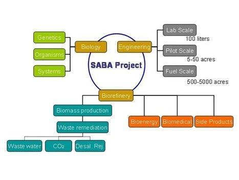 Saudi Arabia Biorefinery from Algae (SABA) Project | EcoMENA | Algae | Scoop.it