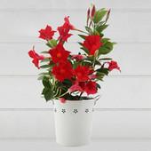 Send Flowers Online | Plants Online | Scoop.it