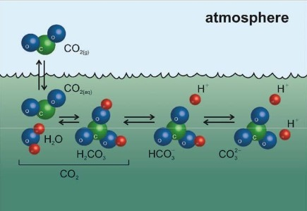 Ocean Acidification, Global Warming's 'Evil Twin' | Plant Biology Teaching Resources (Higher Education) | Scoop.it
