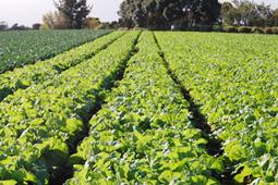 James Bond, robots and vegetables: Ausveg National Convention   The Land   Cultibotics   Scoop.it
