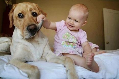 El mejor amigo del hombre: perros, polvo, bacterias y alergias   microBIO   Scoop.it