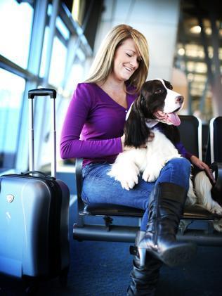 Virgin Australia launches frequent flyer program for pets | Cats Australia | Scoop.it