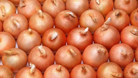 Indian Onion Supplier, Onion Exporters in India | Agrocrops | Scoop.it