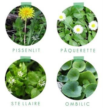 Surprenez vos invités avec un mesclun de plantes sauvages ! | Potager & Jardin | Scoop.it