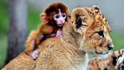 Cute or cuter? See these newborn zoo animals come out to play | This Gives Me Hope | Scoop.it