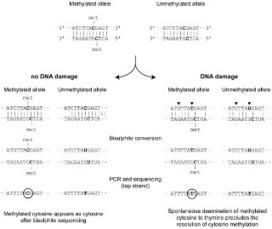 PLOS ONE: High-Resolution Analysis of Cytosine Methylation in Ancient DNA | Eléments d'économie,de technologies, de sciences | Scoop.it