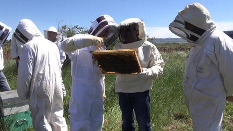 Miel : Le nombre d'apiculteurs a augmenté de 10% en 2015 | Les colocs du jardin | Scoop.it