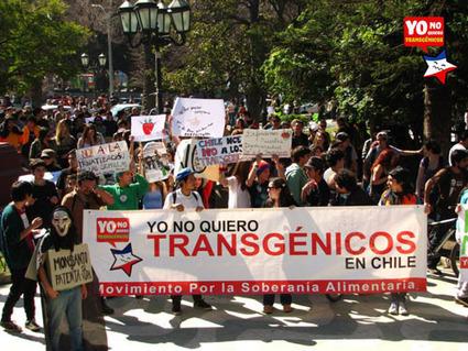 La « loi Monsanto » repoussée par le gouvernement Chilien | Questions de développement ... | Scoop.it