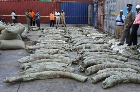 Kenya: Ivory destined for Malaysia seized | Wildlife Trafficking: Who Does it? Allows it? | Scoop.it