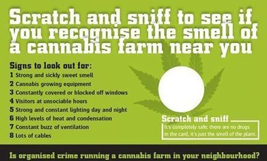 Scratch and sniff cannabis leaflets? Smells like a nice gimmick (UK) | Alcohol & other drug issues in the media | Scoop.it
