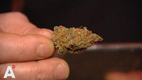 GroenLinks en D66: 'Laat gemeente snel zelf wiet kweken' | Cannabisclub | Scoop.it
