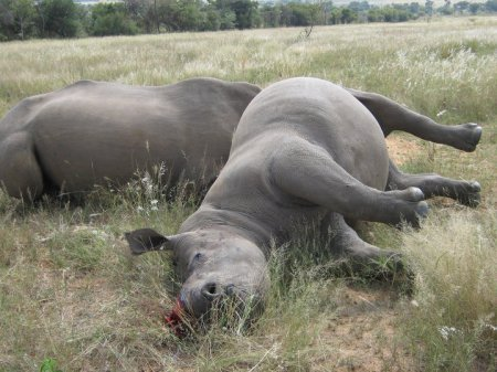 Legalbrief - Free State game farmer appears with rhino accused | What's Happening to Africa's Rhino? | Scoop.it