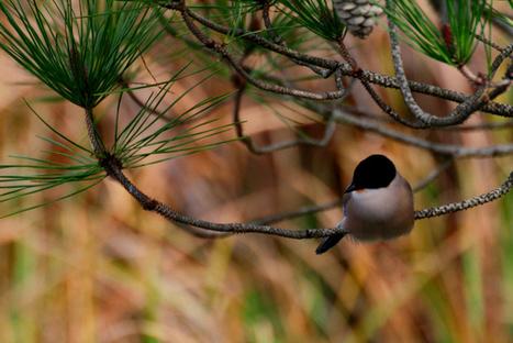 Já estão abertas inscrições para a Algarve Nature Week - Sul Informacao | Digital Marketing | Scoop.it