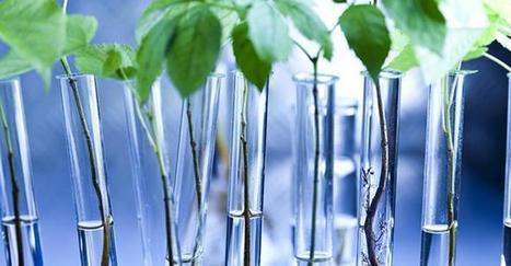 Le biomimétisme : s'inspirer de la nature pour innover durablement | Chimie verte et agroécologie | Scoop.it