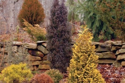 Add Color to Your Evergreen Landscaping | Organic Gardening, Farming, Lawncare, Landscaping & Eating :) | Scoop.it