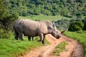 UAV enlisted in the fight against rhino poaching | Poaching & Wildlife Crime | Scoop.it