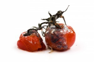 Food Art, this time a series of photographs of rotten food. | food technology | Scoop.it