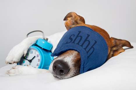 The Dangers of Not Getting Enough Sleep via @sniply | Attract Your Business | Scoop.it