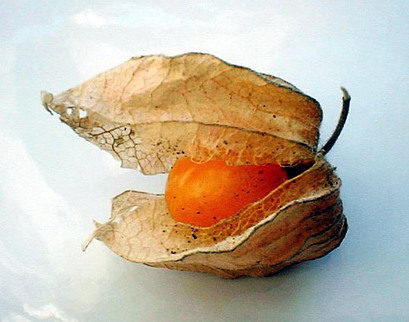Organic Incan Golden Berries | A fruit of the Chinese lantern Physalis | Super Foods | Scoop.it