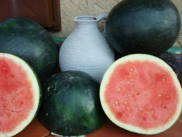The Year of the Watermelon - Vegetable Gardener | Annie Haven | Haven Brand | Scoop.it