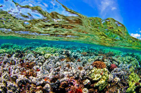 Climate Change Will Not Spare an Inch of Global Ocean, Study Finds   coastal risk   Scoop.it
