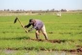CESBIO/OMP - Un outil en ligne d'aide à l'irrigation | Actualité des laboratoires du CNRS en Midi-Pyrénées | Scoop.it