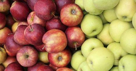 Embargo russe : la Pologne veut l'ouverture du marché américain à ses pommes | International | Scoop.it