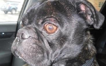Birdfeeder Keeps Dog Alive Until Winter Rescue Unfolds - Care2.com | Dog Rescue | Scoop.it