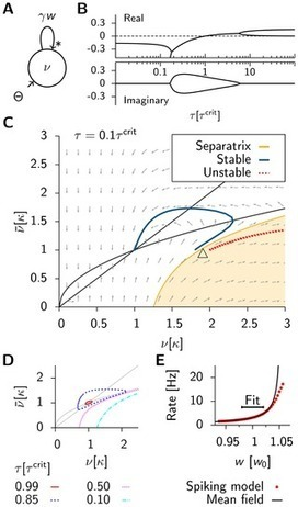 Synaptic Plasticity in Neural Networks Needs Homeostasis with a Fast Rate Detector | Social Foraging | Scoop.it