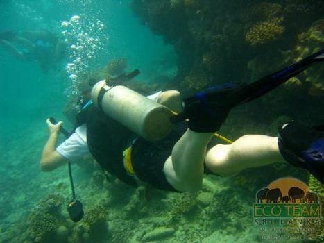 Timeline Photos - Eco Team (Pvt) Ltd | Facebook | Sri Lanka Beaches | Scoop.it