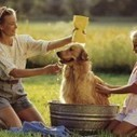 Top Dog Grooming Tips for a Pet Groomer | Pets Health | Scoop.it
