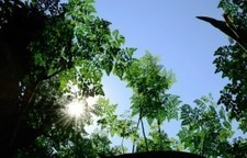 Helath Benefits of Moringa - The Superfood You Don't Know About | Green Consumer Forum | Scoop.it