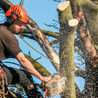 A-1 Tree Pruning & Removal