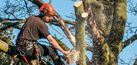 Expert tree service by A-1 Tree Pruning & Removal in Yakima, WA | A-1 Tree Pruning & Removal | Scoop.it
