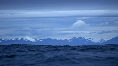 The bottom of the world | Oceans and Wildlife | Scoop.it