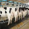 Animal Nutrition Spotlight