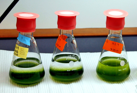 Is biofuel from algae 'green' enough yet? | The Future of Water & Waste | Scoop.it