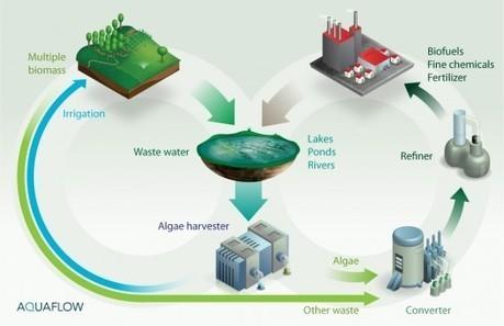 Valoriser la vase en énergie grâce aux algues | Développement durable et efficacité énergétique | Scoop.it