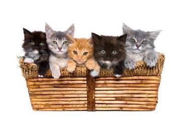 Kitten Care | Raising a Kitten | Caring for Cats | Scoop.it