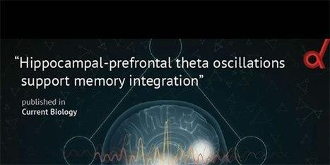 Rhythmic Brain Waves Help Integrate Memories | the plastic brain | Scoop.it