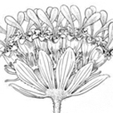 Searchable image collections from the National Museum of Natural History | Plant Biology Teaching Resources (Higher Education) | Scoop.it