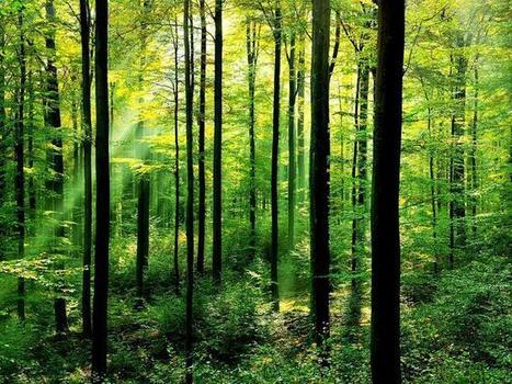 Plantations to be slowly converted into forests - TAMIL NADU | Food and Drink multinationals | Scoop.it