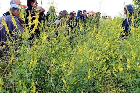 Alsace   Sans labours ni pesticides, une ferme céréalière qui préserve le sol et l'eau - L'Alsace   Des 4 coins du monde   Scoop.it