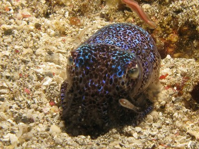 What Does an Octopus Have in Common With a Kindle? Surprisingly, a Lot | Biodiversity IS Life  – #Conservation #Ecosystems #Wildlife #Rivers #Forests #Environment | Scoop.it