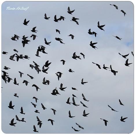 Birds! | Birds | Scoop.it