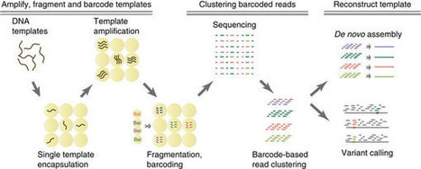 Droplet barcoding for massively parallel single-molecule deep sequencing : Nature Communications : Nature Publishing Group | Single cell genomics and transcriptomics | Scoop.it