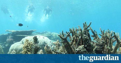 'It's a depressing sight': climate change unleashes ghostly death on Great Barrier Reef | Sustain Our Earth | Scoop.it
