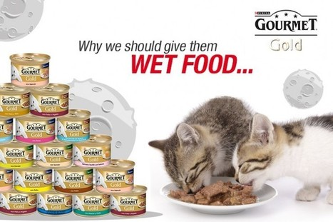 Nourriture humide: Gardez votre chat hydraté! | Nestle | Scoop.it