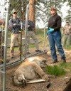 Seminar teaches wildlife forensics for poaching cases | Wildlife Trafficking: Who Does it? Allows it? | Scoop.it